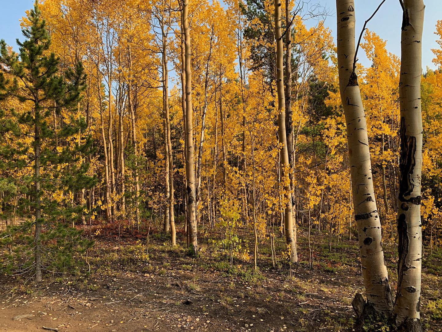 Fall Hiking Near Breckenridge - Stacy Sanchez Photo